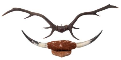 A pair of eight point antlers together with a pair of cow horns on a shield plinth:118cm and 86cm