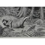 Robert Gillmor (b.1936) Badgers, pencil signed etching, numbered 79/200, 27cm x 18cm
