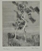 Peter David Polaine (b1937) Australian Ghost Trees, pencil signed monotype, 30cm x 36cm