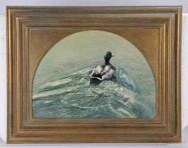 Nicholas Manning (1962-) Mallard, signed oil on board, 57cm x 40cm