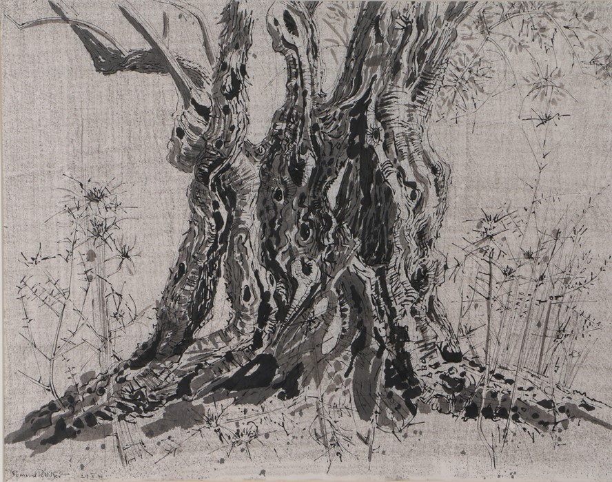 Sigmund Pollitzer (British, 1913-1982) Base of a tree, signed and dated 71, pen and wash, 65cm x