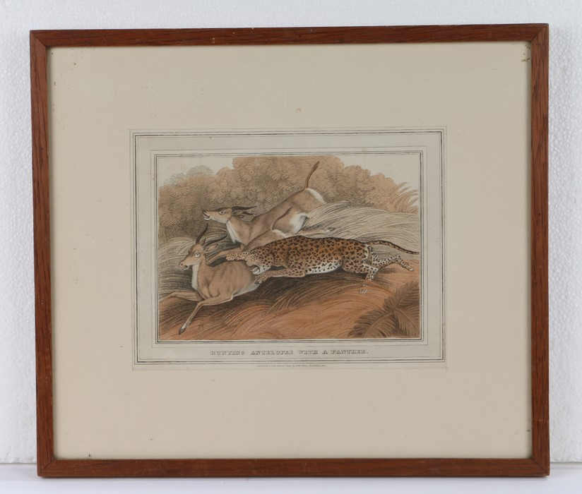 Hunting Antelopes With A Panther, coloured print, contained with in an oak and glazed frame, image