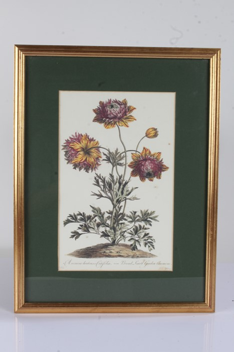 """Five botanical prints, to include """"rhododendron 'champagne'"""", """"broad leav'd garden anemone, """""""