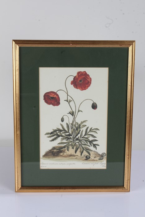 """Five botanical prints, to include """"rhododendron 'champagne'"""", """"broad leav'd garden anemone, """" - Image 2 of 4"""