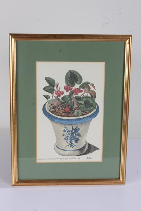 """Five botanical prints, to include """"rhododendron 'champagne'"""", """"broad leav'd garden anemone, """" - Image 3 of 4"""