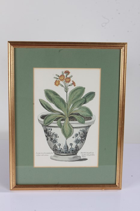 """Five botanical prints, to include """"rhododendron 'champagne'"""", """"broad leav'd garden anemone, """" - Image 4 of 4"""