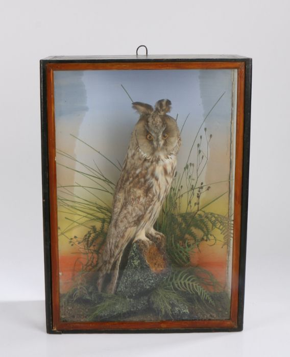 Taxidermy long eared owl, modelled on a branch surrounded by foliage, housed in a gilt and