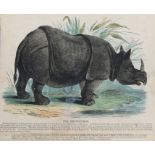 Josiah Wood Whymper (1813-1903), a series of coloured prints depicting animals of the world,