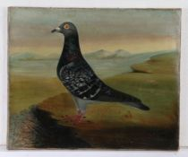 J Browne, 20th Century British school, portrait of a Racing Pigeon, signed and dated 1924 oil on