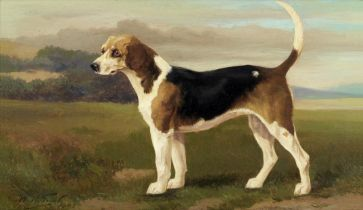 William Henry Hamilton Trood (British, 1860-1899) The fox hound 'Banich', property of Lord Willou...