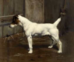 John Gray (British, Late 19th/Early 20th Century) A Jack Russell waiting to pounce
