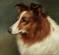 Walter Herbert Wheeler (British, 1878-1960) Portrait of a collie