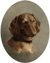 M. Genge (British, Early 20th century) Portrait of a dachshund painted oval 42.6 x 36.8cm (16 3/4...