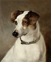 English School, 19th century Portrait of a Jack Russell
