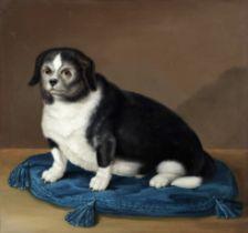 English School, 19th Century Dog on a blue cushion