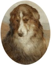 Attributed to Edwin Douglas (British, 1848-1914) Study of a collie
