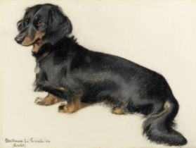 English school, 20th century Portrait of a dachshund