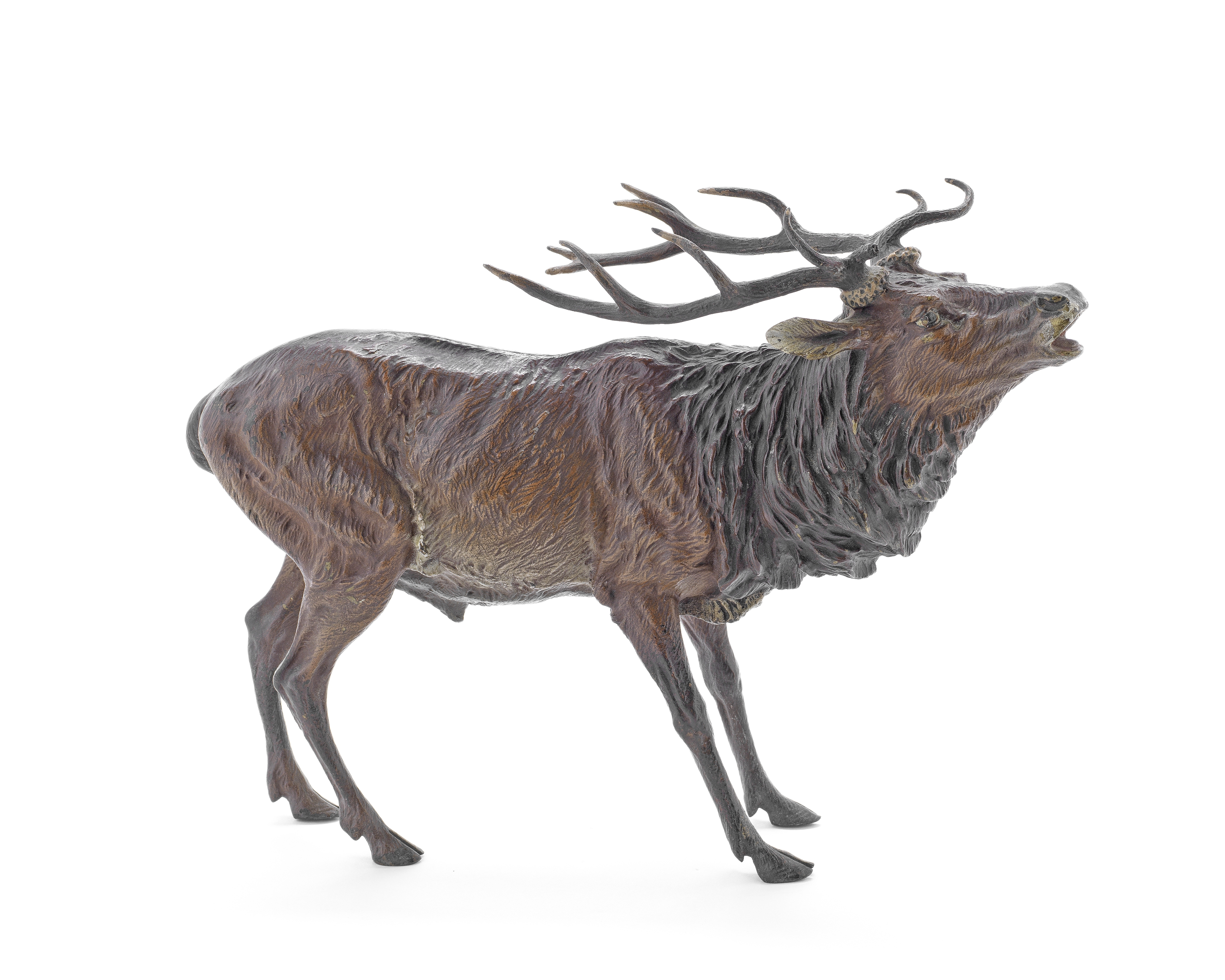 Franz Bergman (Austrian 1861-1936): A cold painted bronze model of a stag