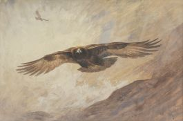 Archibald Thorburn (British, 1860-1935) Golden Eagle in flight