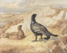 Archibald Thorburn (British, 1860-1935) Blackgame in a landscape