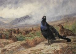 Archibald Thorburn (British, 1860-1935) Blackgame