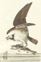 AUDUBON (JOHN JAMES) The Birds of America, from Drawings Made in the United States and their Terr...