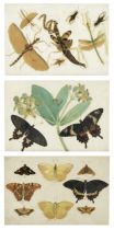 English School, 19th Century Studies of Indian insects three works each sheet 14.6 x 21.6cm (5 3...