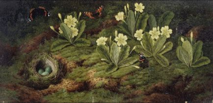 English School, 19th Century Primroses, a bird's nest and butterflies on a forest floor