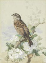 Archibald Thorburn (British, 1860-1935) A Dunnock