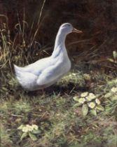 Rodger McPhail (British, born 1953) A duck amongst primroses