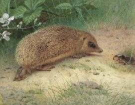Archibald Thorburn (British, 1860-1935) 'The hedgehog'