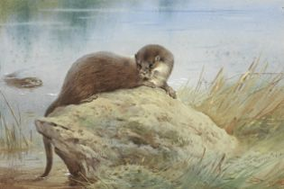Archibald Thorburn (British, 1860-1935) Otters by the bank