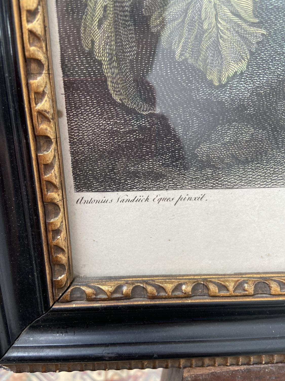 A late 18th century coloured engraving of Jacobus Hamiltonius Marchio ab Hamilton, Sacri Stabuli - Image 2 of 5