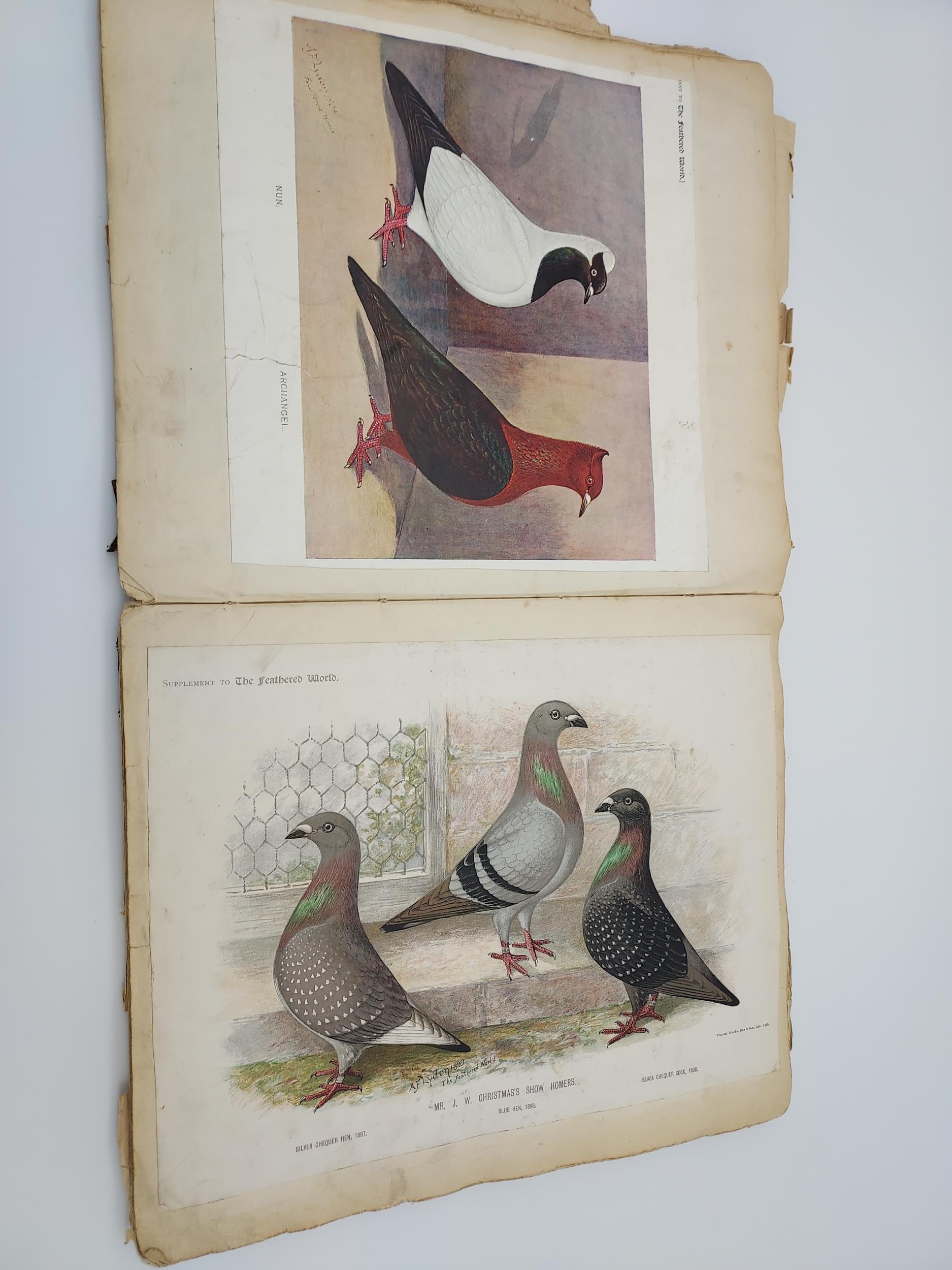 An Antique scrap book - Image 5 of 9