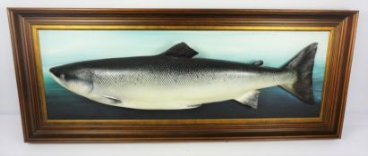 W. Forbes of Braemar Aberdeenshire (Taxidermist) Framed Salmon Cast Trophy, Caught at the Point Pool