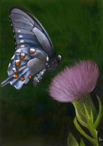 SOLD - Bell Villasante (Spanish, B.1999), Butterfly on a thistle, acrylic on board, framed 49cm x