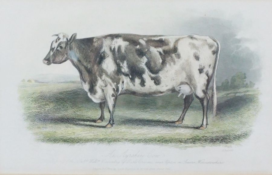 Assorted Cow Subject Prints, With other Prints and a Modern Sampler (7)