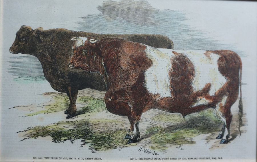 Assorted Cow Subject Prints, With other Prints and a Modern Sampler (7) - Image 4 of 7