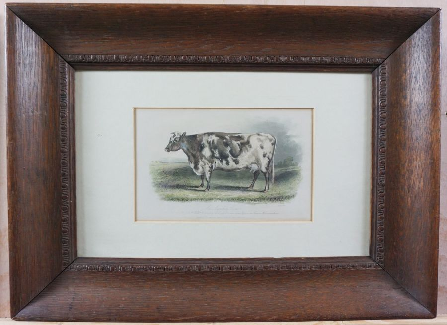 Assorted Cow Subject Prints, With other Prints and a Modern Sampler (7) - Image 2 of 7