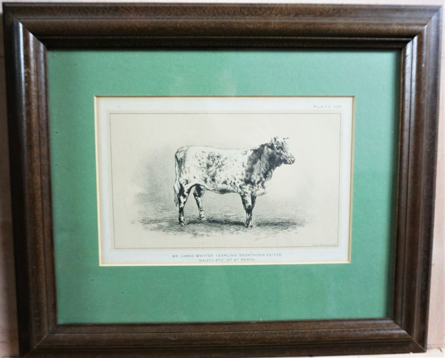 Assorted Cow Subject Prints, With other Prints and a Modern Sampler (7) - Image 3 of 7