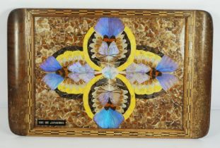 A Taxidermy Walnut Framed Butterfly Wing Tray inscribed 'Rio de Janeiro'