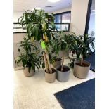 (6) POTTED PLANT(S) -- (7625 OMNITECH PLACE VICTOR NEW YORK)