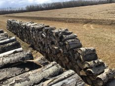 30Ft Row of Aspen Fire Wood