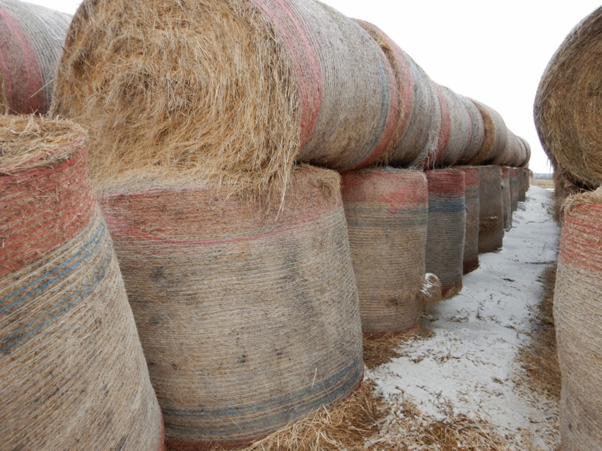 100 ++ ROLLS OF GRASS HAY - MOSTLY W/NET WRAP - Image 6 of 9