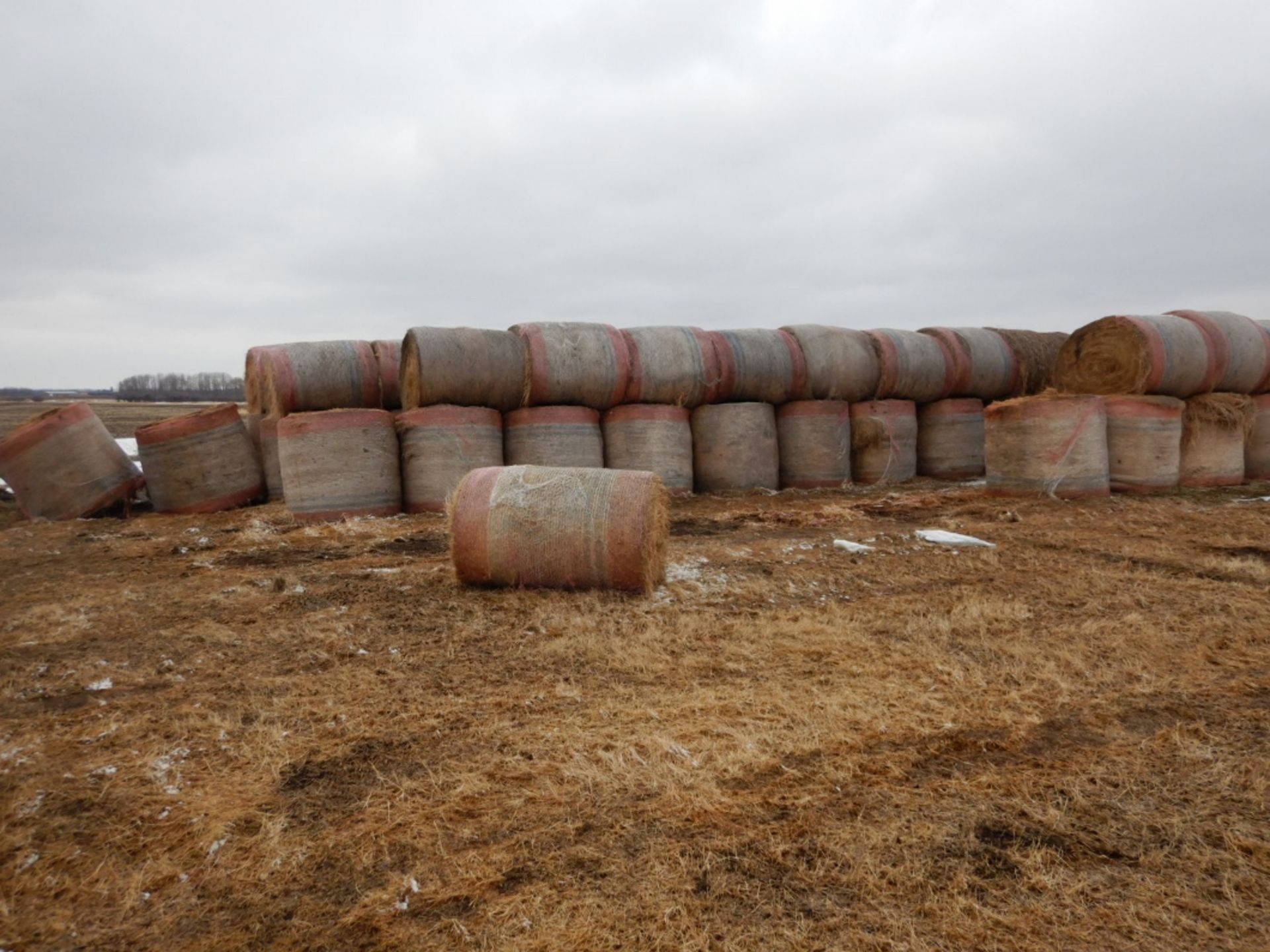 100 ++ ROLLS OF GRASS HAY - MOSTLY W/NET WRAP - Image 2 of 9