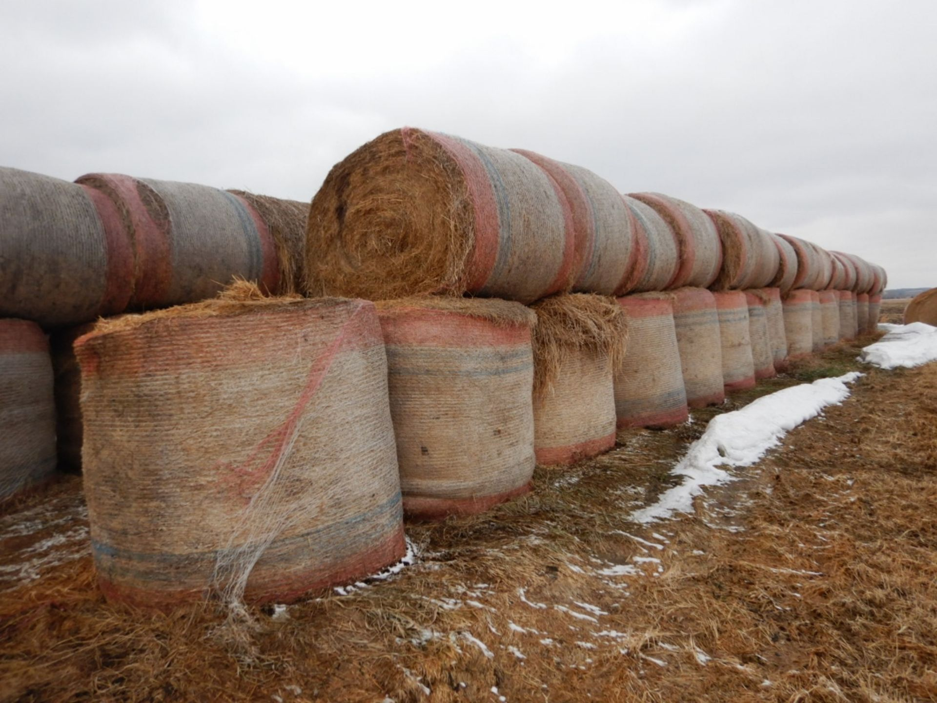 100 ++ ROLLS OF GRASS HAY - MOSTLY W/NET WRAP - Image 3 of 9