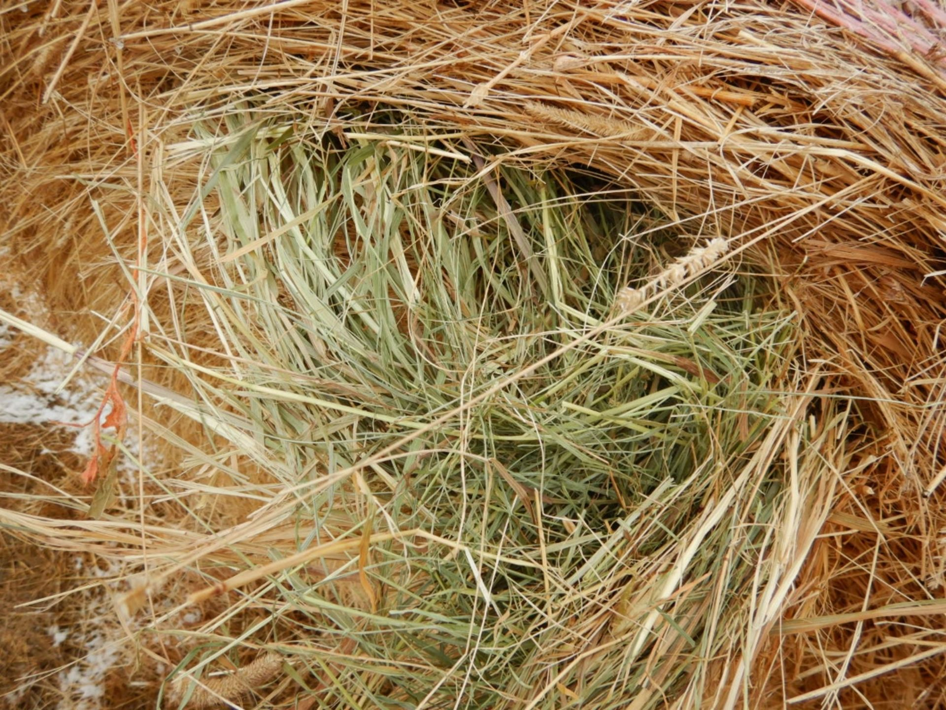 100 ++ ROLLS OF GRASS HAY - MOSTLY W/NET WRAP - Image 9 of 9