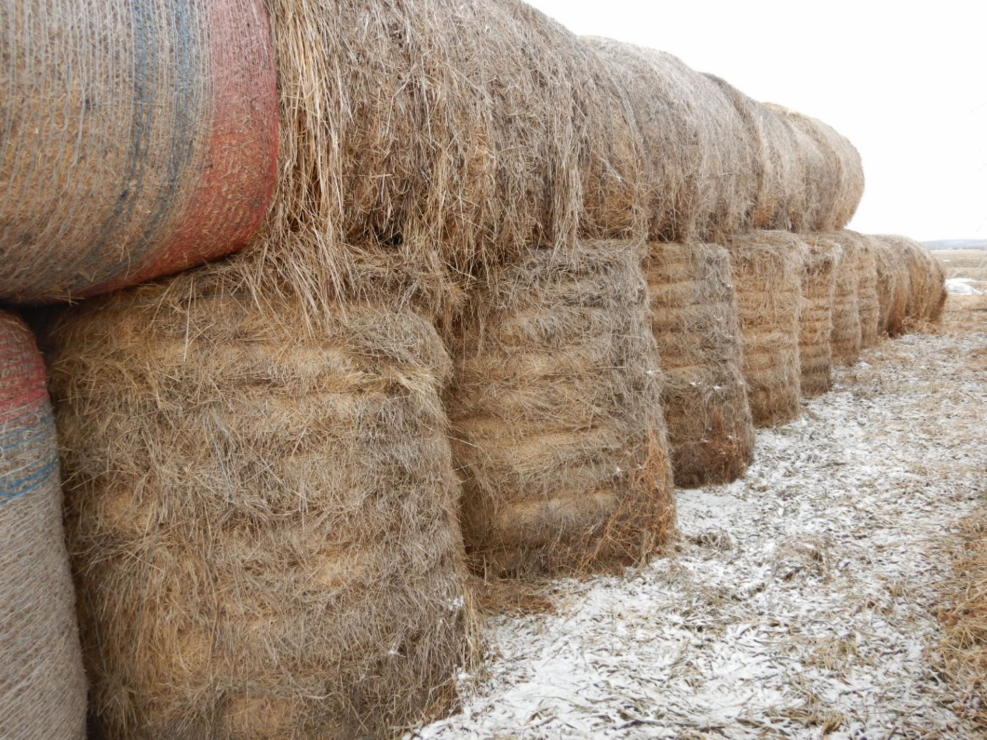 100 ++ ROLLS OF GRASS HAY - MOSTLY W/NET WRAP - Image 4 of 9