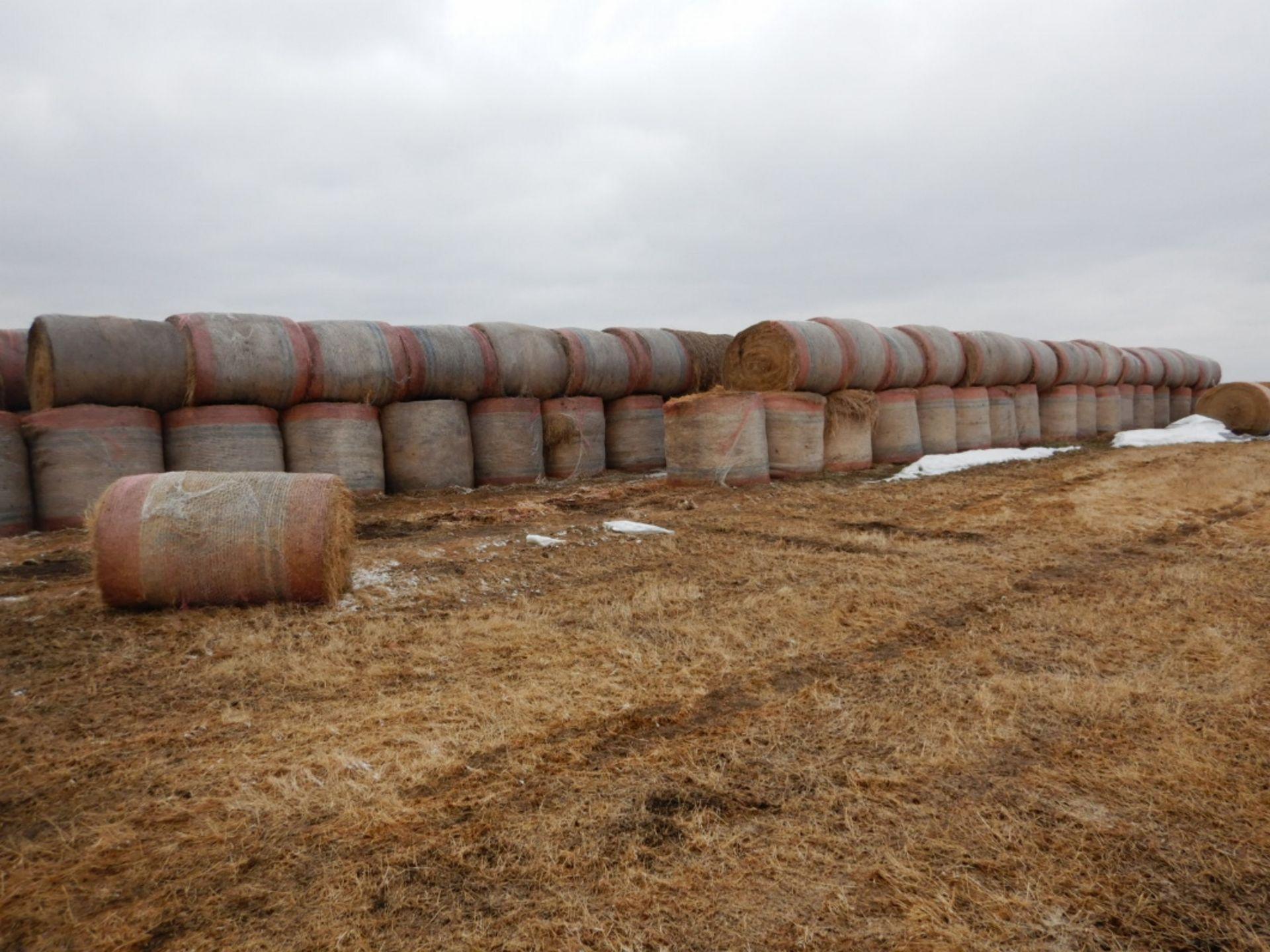 100 ++ ROLLS OF GRASS HAY - MOSTLY W/NET WRAP
