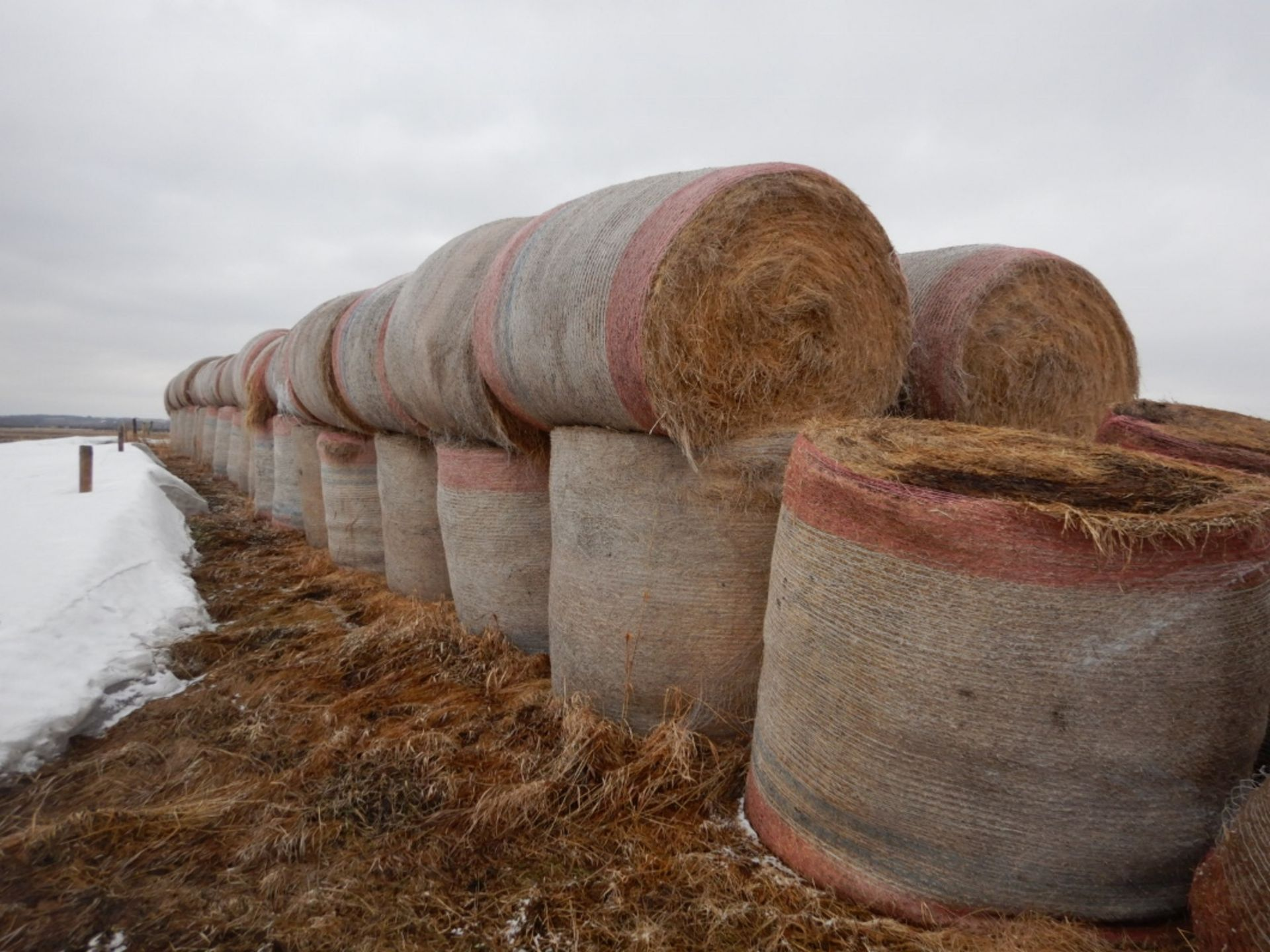 100 ++ ROLLS OF GRASS HAY - MOSTLY W/NET WRAP - Image 7 of 9